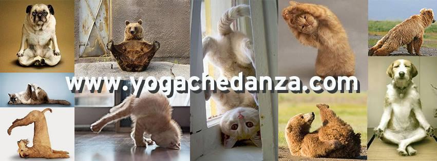 yoga che danza gatto orso cane