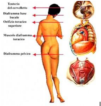 cinque diaframmi